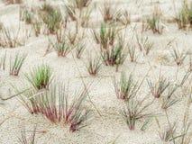 Abrazaderas de la hierba de la duna - parque nacional de Slowinski, Polonia Fotos de archivo