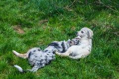 Abrazo de dos cachorros fotografía de archivo