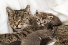 Abrazo de los bebés de los gatos con la madre Fotografía de archivo