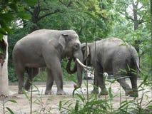 Abrazo de los elefantes Imagen de archivo