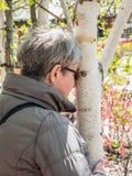 Abrazo del árbol de abedul blanco imagenes de archivo