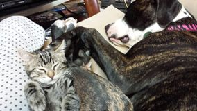 Abrazos del gatito y del perrito Imagenes de archivo