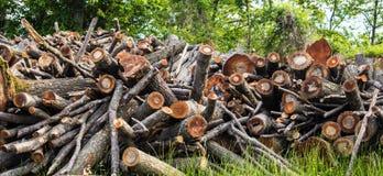 Abre una sesión el bosque fotografía de archivo