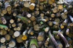 abre una sesión el bosque del verano, tala de árboles, destrucción del bosque, leña fotos de archivo libres de regalías