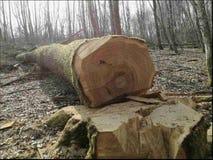 Abre una sesión la madera imagen de archivo libre de regalías