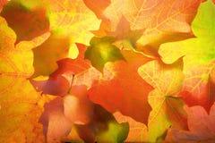 Abrégé sur lame d'érable d'octobre Photo libre de droits