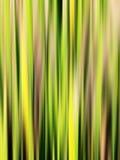 Abrégez les traînées vertes Photographie stock