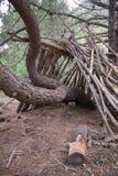 Abri dans la forêt Photos libres de droits