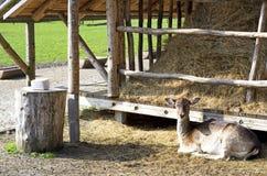 Abri de cerfs communs Image stock