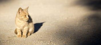 Abri de chat et concept de délivrance Images stock