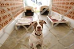 Abri de chien photo libre de droits