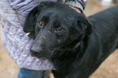 Abri de chien pour les animaux sans abri Images libres de droits