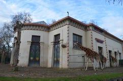 Abri de girafe et de girafe Photographie stock libre de droits