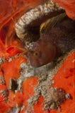Abri de poissons de bébé dans une caverne Photo libre de droits