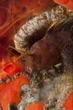 Abri de poissons de bébé dans une caverne Photo stock