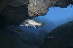 Abri de recherche de Mostella dans une caverne Photographie stock