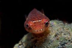 Abri de recherche de poissons dans une caverne Photo stock