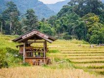 Abri en bambou Photo stock
