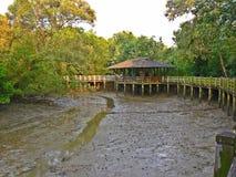 Abri et promenade en bois à la réservation de marécage de Sungei Buloh, Singapour Images libres de droits