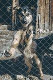 Abri sans foyer de crabot Photographie stock libre de droits