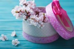 Abricó da caixa da flor da flor da mola no fundo de madeira azul Imagens de Stock