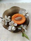 Abricó do doce de fruta com um ramo do abricó de florescência real imagem de stock royalty free