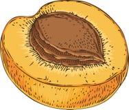 Abricó maduro no seção transversal Imagem de Stock