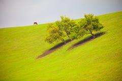 Abricó Vally Foto de Stock