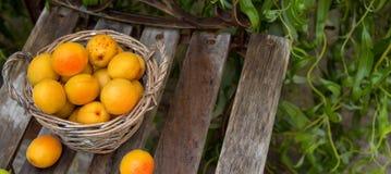 Abricós maduros frescos empilhados em uma cesta Fotografia de Stock Royalty Free