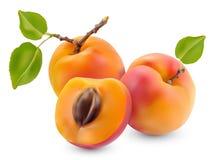 Abricot avec des feuilles Photos libres de droits