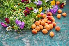 Abricot et fleurs Images libres de droits
