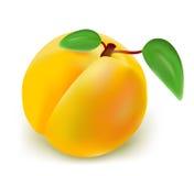 Abricot frais Images libres de droits