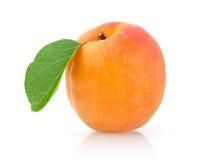 Abricot mûr Photos libres de droits