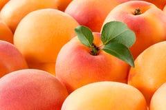 abricot Macro organique frais de fruit Fond Images stock