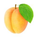 Abricot orange mûr avec la feuille verte d'isolement Images libres de droits