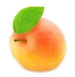 Abricot orange mûr avec la feuille verte d'isolement Image stock