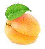 Abricot orange mûr avec la feuille verte d'isolement Photo libre de droits