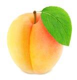 Abricot orange mûr avec la feuille verte d'isolement Photos libres de droits