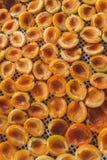 Abricot sec dans le dessiccateur-déshydrateur Une manière de préserver la vitamine images libres de droits