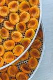 Abricot sec dans le dessiccateur-déshydrateur Une manière de préserver la vitamine photographie stock libre de droits