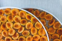 Abricot sec dans le dessiccateur-déshydrateur Une manière de préserver la vitamine image libre de droits