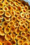 Abricot sec dans le dessiccateur-déshydrateur Une manière de préserver la vitamine photo libre de droits