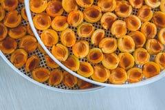 Abricot sec dans le dessiccateur-déshydrateur Une manière de préserver la vitamine photos libres de droits