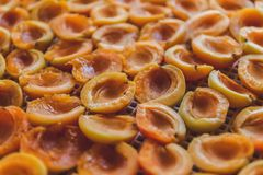 Abricot sec dans le dessiccateur-déshydrateur Une manière de préserver la vitamine photographie stock
