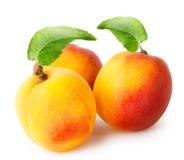 Abricot trois parfumé lumineux avec des feuilles photos stock