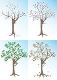 Abricotier et les saisons. Fond. Photographie stock