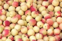 Abricots Images libres de droits