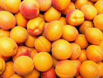 Abricots Image stock