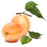Abricots avec des lames. Photo libre de droits