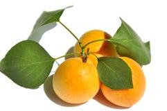Abricots d'isolement sur le fond blanc Photo stock